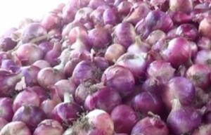 Onion situation