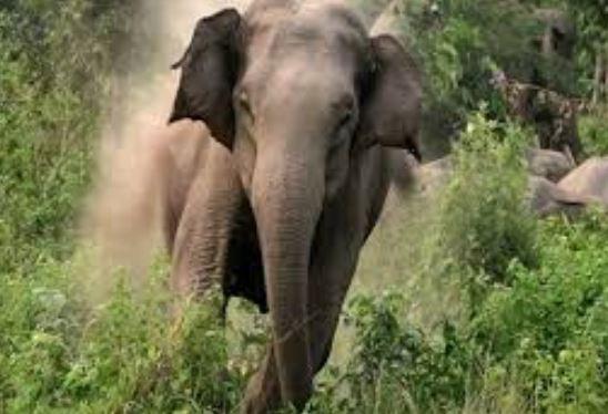 Mother, son killed in elephant attack in Sundargarh