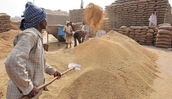 Paddy procurement