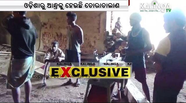 AP mafias run wood smuggling in Odisha govt's godown